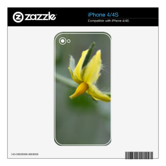 Flower of a Cucumber  plant Decals For The iPhone 4
