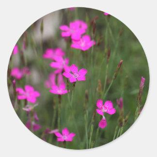 Flower of a maiden pink classic round sticker