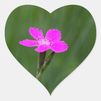 Flower of a maiden pink heart sticker