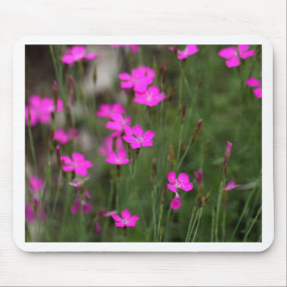 Flower of a maiden pink mouse pad