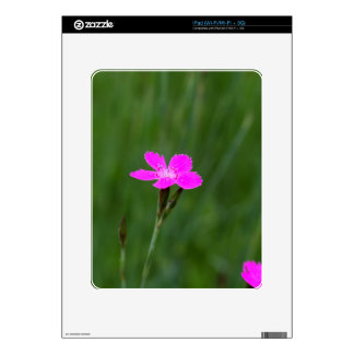Flower of a maiden pink skin for iPad