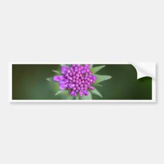 Flower of a Scabiosa lucida Bumper Sticker