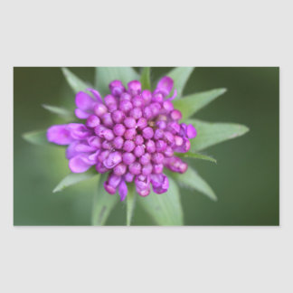 Flower of a Scabiosa lucida Rectangular Sticker