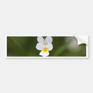 Flower of a wild field pansy bumper sticker