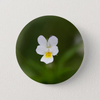 Flower of a wild field pansy button