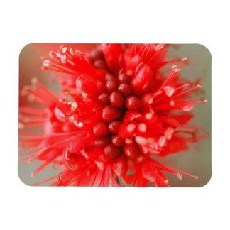 Flower Of Dwarf Boerbean, Sabi Sands Magnet