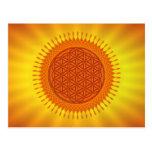 Flower Of Live / sunny design Post Cards