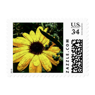 Flower of Love Postage Stamp