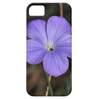 Flower of perennial or blue flax iPhone SE/5/5s case
