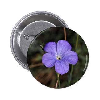 Flower of perennial or blue flax pinback button