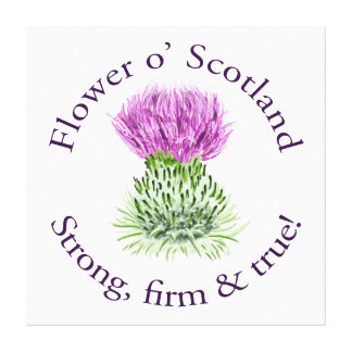Flower of Scotland. Strong, firm and true! Gallery Wrap Canvas