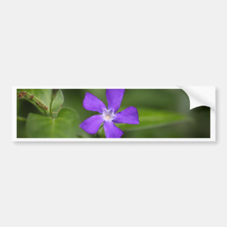 Flower of the bigleaf periwinkle (Vinca major). Bumper Sticker