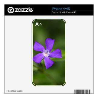 Flower of the bigleaf periwinkle (Vinca major). Skins For iPhone 4