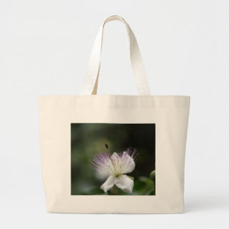 Flower of the caper bush, Capparis spinos. Large Tote Bag