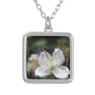 Flower of the caper bush, Capparis spinos. Silver Plated Necklace