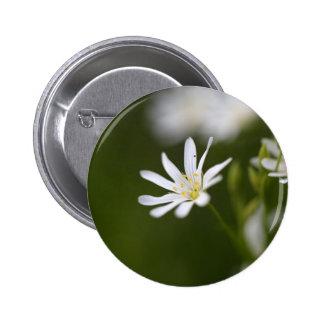 Flower of the  greater stitchwort button