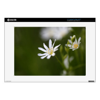 Flower of the  greater stitchwort decal for laptop