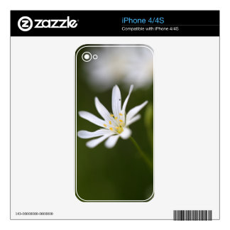 Flower of the  greater stitchwort iPhone 4S skin