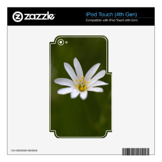 Flower of the  greater stitchwort iPod touch 4G decal