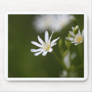 Flower of the  greater stitchwort mouse pad