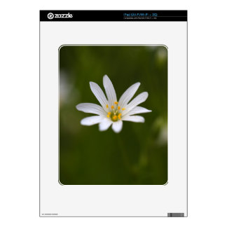 Flower of the  greater stitchwort skin for the iPad