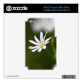 Flower of the  greater stitchwort skins for iPod touch 4G