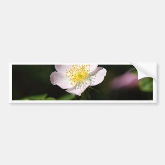 Flower of the harsh downy-rose bumper sticker