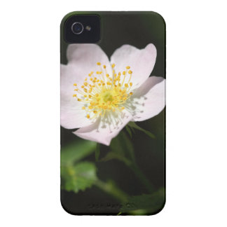 Flower of the harsh downy-rose iPhone 4 case