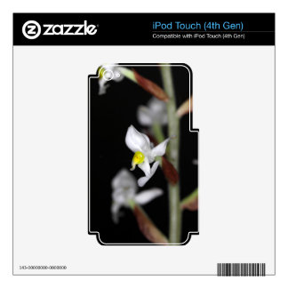 Flower of the orchid Ludisia discolor iPod Touch 4G Decals