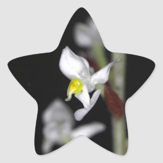 Flower of the orchid Ludisia discolor Star Sticker