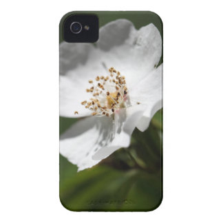 Flower of the pine rose iPhone 4 Case-Mate case