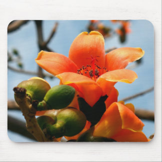 Flower of the Red Silk Cotton Tree Mouse Pad