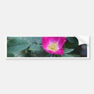 Flower of the wild Soft Downy Rose Bumper Sticker
