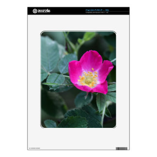 Flower of the wild Soft Downy Rose Decals For The iPad