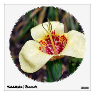 Flower of Tigridia pavonia or jockey's cap lily Wall Decal