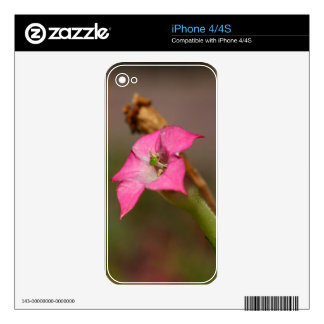Flower of tobacco (Nicotiana tabacum) Skins For iPhone 4
