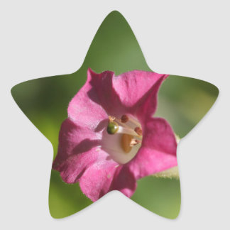 Flower of tobacco (Nicotiana tabacum) Star Sticker