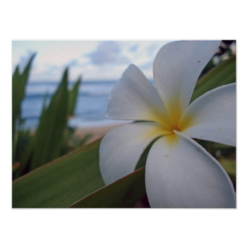 Flower on the Beach Poster