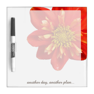 Flower Orange Dahlia any Text on any Color Dry Erase Board