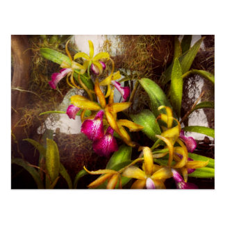 Flower - Orchid - There's something about orchids Postcard
