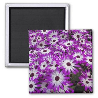 Flower pattern, Kuekenhof Gardens, Lisse, Refrigerator Magnets
