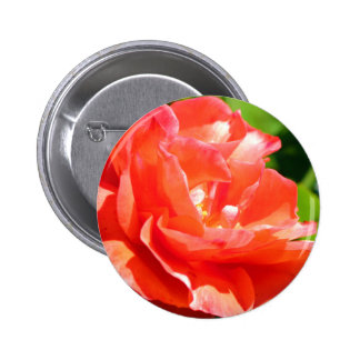 Flower peach button
