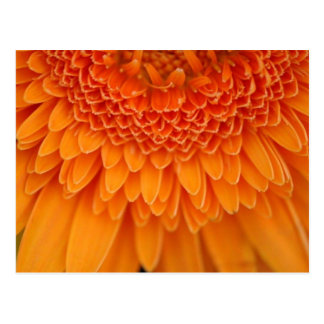 Flower Petal - Postcard