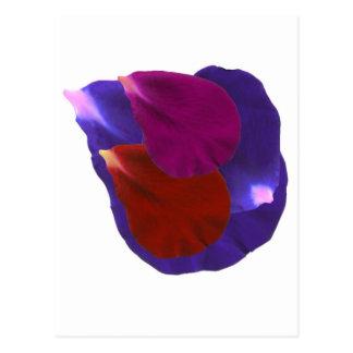 Flower Petals Postcard