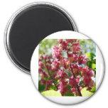 flower,pink magnets