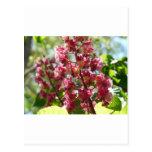 flower,pink post card