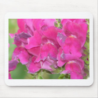 flower,pink snapdragon mouse pad