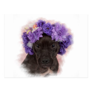 Flower Pitty Postcard