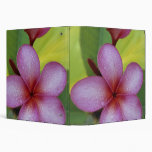 Flower, Plumeria sp.), South Pacific, Niue 3 Ring Binder