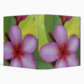 Flower, Plumeria sp.), South Pacific, Niue 3 Ring Binders